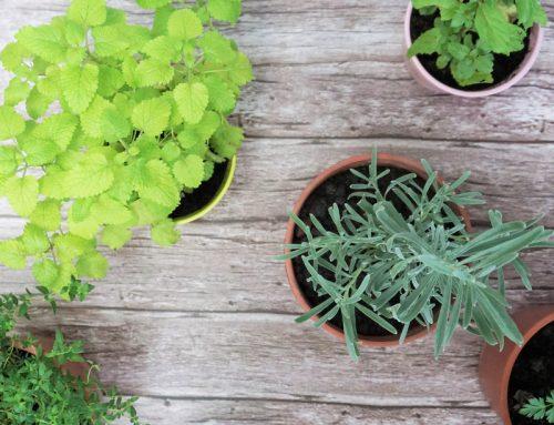放幾盆香香的香草植物在家吧!可聞可摸可入菜 還可泡茶!
