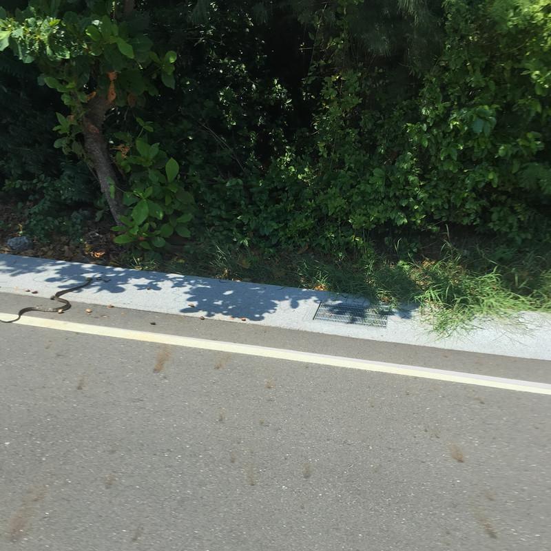 小琉球交通_搭公車看到蛇過馬路