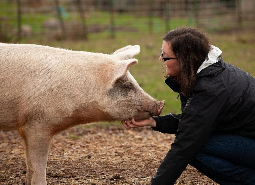 豬是人類的朋友