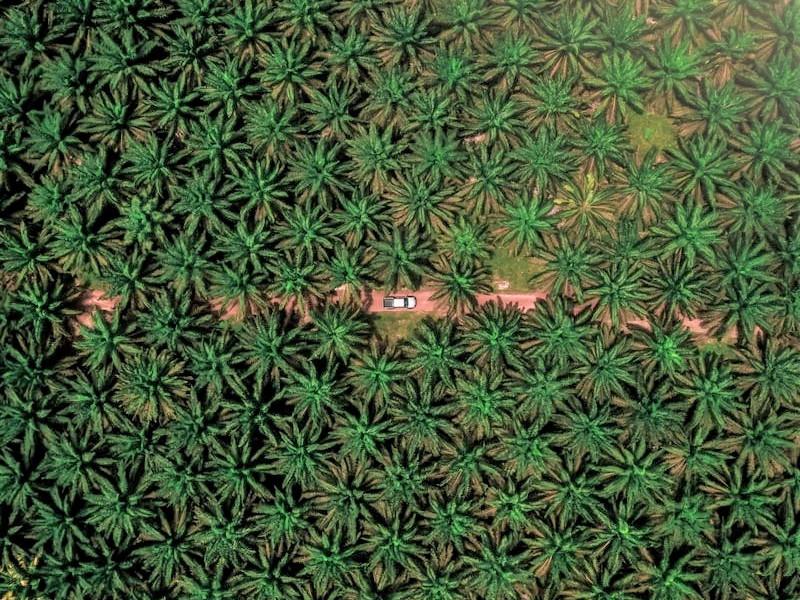 棕櫚油問題