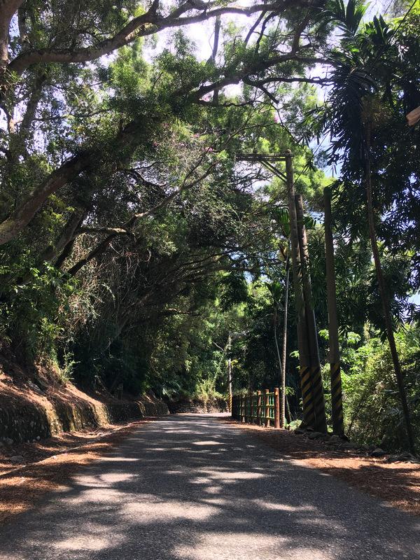 花蓮吉安楓林步道